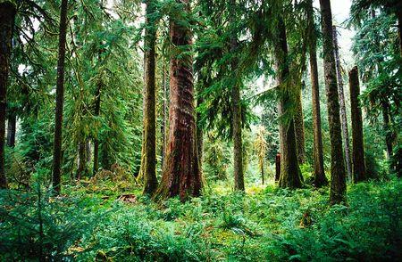 Treeteacher